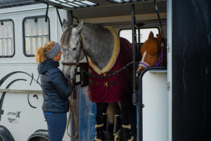 Hestehengere